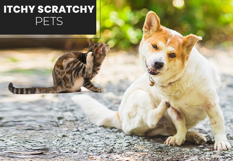 Itchy Scratchy Pets