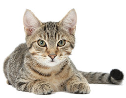Shop for Cat Foods for Adult Cats
