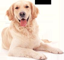 Shop for Dog Foods for Senior Dogs